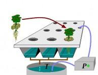 imagen Cómo hacer un cultivo hidropónico de raíz flotante