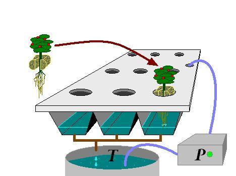 Cultivo hidropónico 5