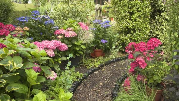 Renovar el jardín de verano 1