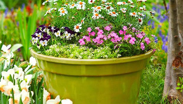 12 coloridas composiciones para macetas parte i - Plantas para macetas exterior resistentes ...