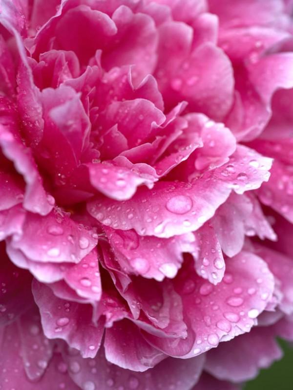 Tareas de primavera en el jardín 4