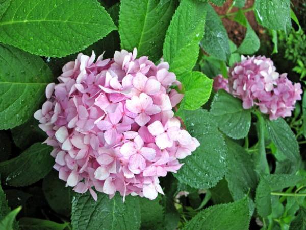Tareas de primavera en el jardín 10