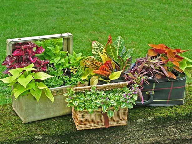 Jardineras económicas 5