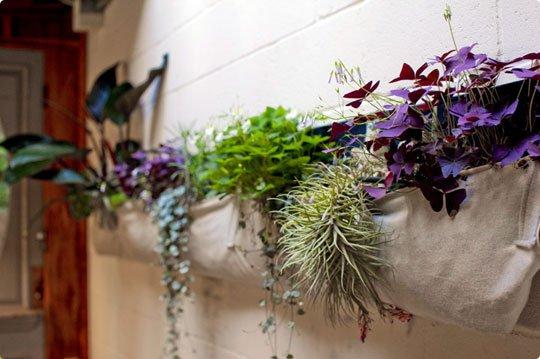 Las mejores plantas para tener en el ba o - Plantas en el bano ...