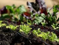 imagen Las ventajas de tener un jardín orgánico