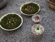 imagen Cómo plantar narcisos blancos y amarilis en macetas