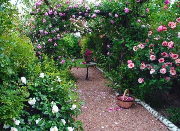 Enredaderas y cubresuelos guia de jardineria jardines for Jardin de plantas