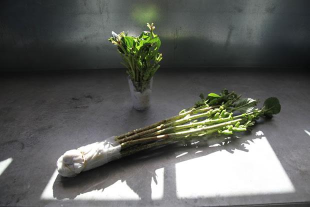 Reproducción hortensias 1