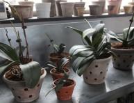 imagen Trasplantando las orquídeas paso a paso