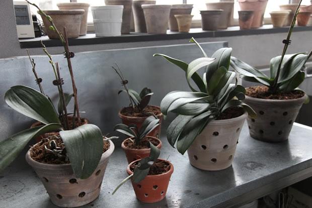 Trasplante de orquídeas 1