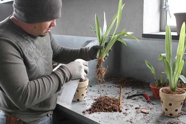 Trasplante de orquídeas 14