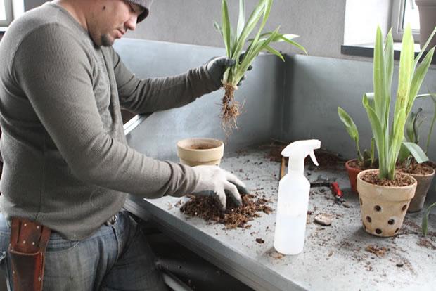 Trasplante de orquídeas 15