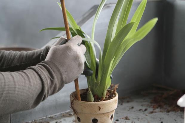 Trasplante de orquídeas 17