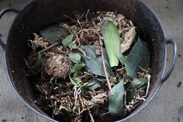 Trasplante de orquídeas 7