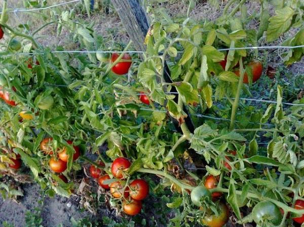 7 cultivos de huerta para principiantes 1