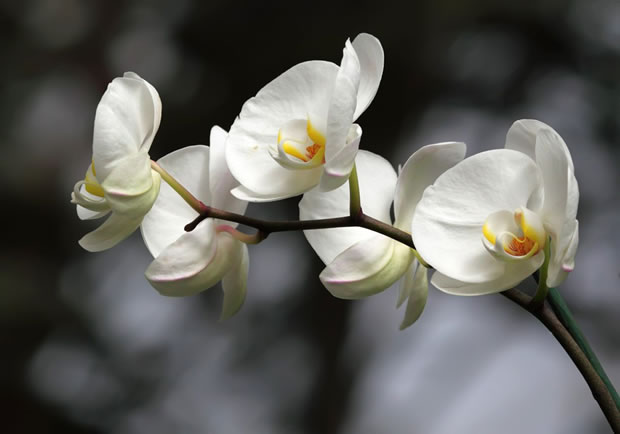 5 plantas de interior ideales para espacios con poca luz for Cuidados orquideas interior