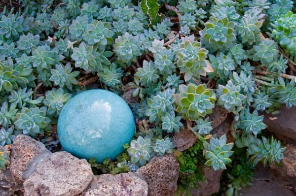 plantas-de-follaje-azul-01