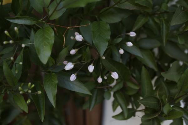 10 ideas para un jardín de estilo indio 7