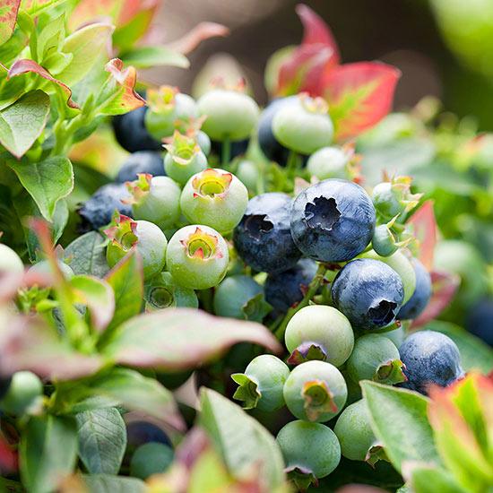 Superalimentos para cultivar en el jardín 1