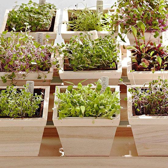 Superalimentos para cultivar en el jardín 7