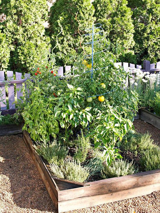 Crea un rinc n de la pizza en tu jard n for Crea tu jardin