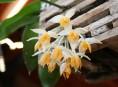 imagen Dónde cultivar las orquídeas