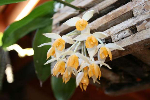 Cultivar orquídeas 4
