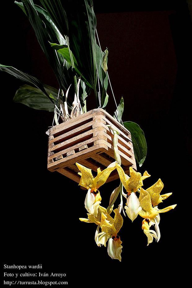 dónde cultivar las orquídeas