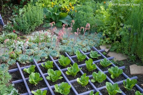 Huerto y jardín 2