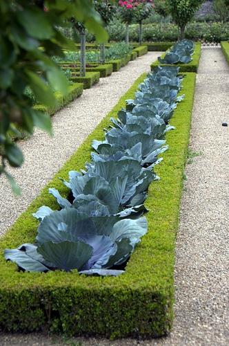 Huerto y jardín 6