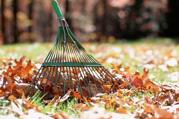 Limpieza jardín 2
