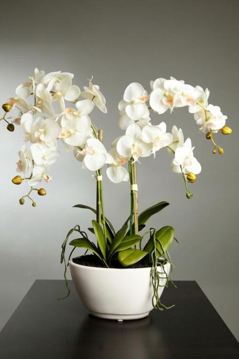 Orquídea 1