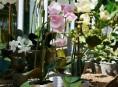 imagen Causas por las que no florece una orquídea