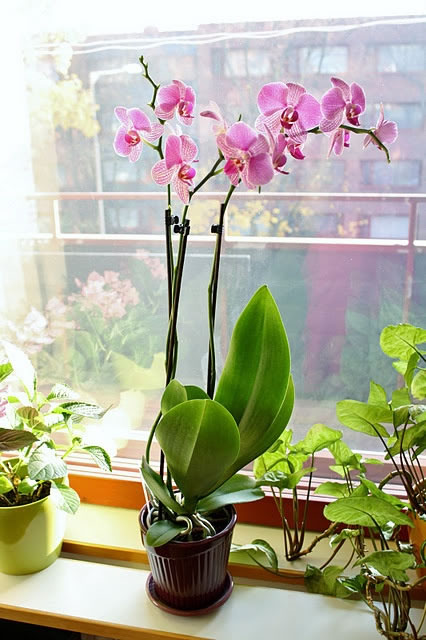 Orquídea 5