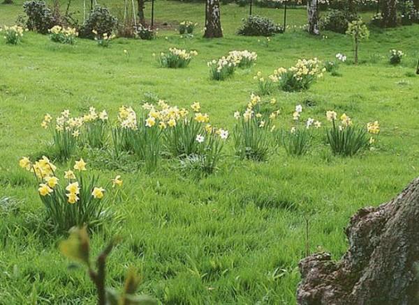 Bulbosas de primavera