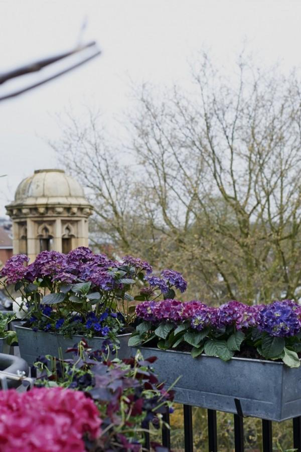 Consejos para un jardín en el balcón 3