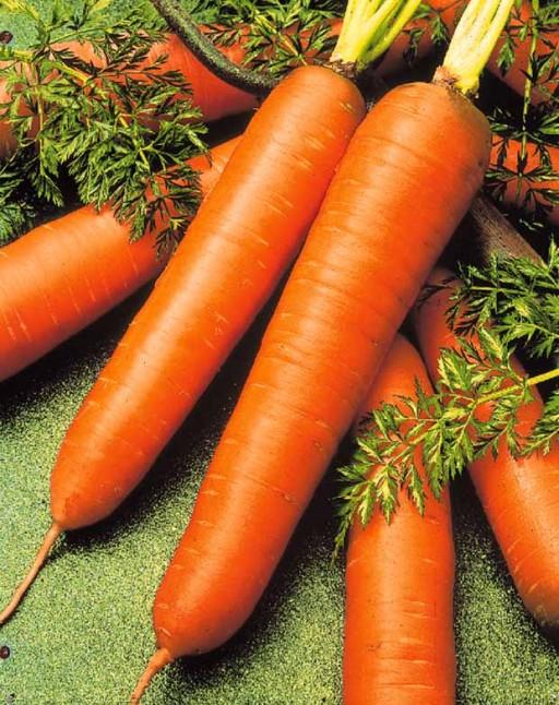 Cultivo intercalado de zanahorias y rábanos3