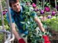imagen Consejos para cultivar hermosos rosales