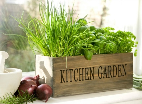 5 mejores hierbas arom ticas para cultivar en casa - Cultivo de hierbas aromaticas en casa ...