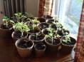 imagen Las mejores verduras y hortalizas para cultivo en interior