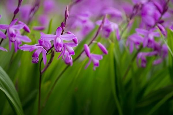 Tipos de orquídeas 1