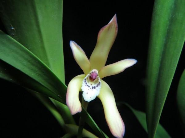 Tipos de orquídeas 3