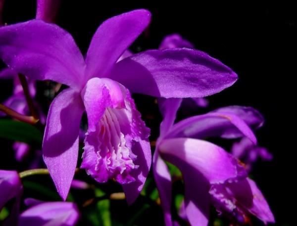 Tipos de orquídeas 5