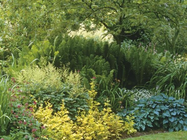 Jardín sin flores 1