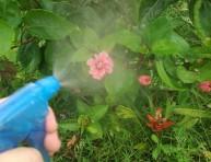 imagen Usos del bicarbonato sódico en el jardín
