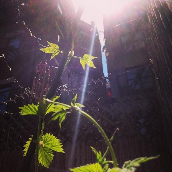 Tips para el jardinero 1