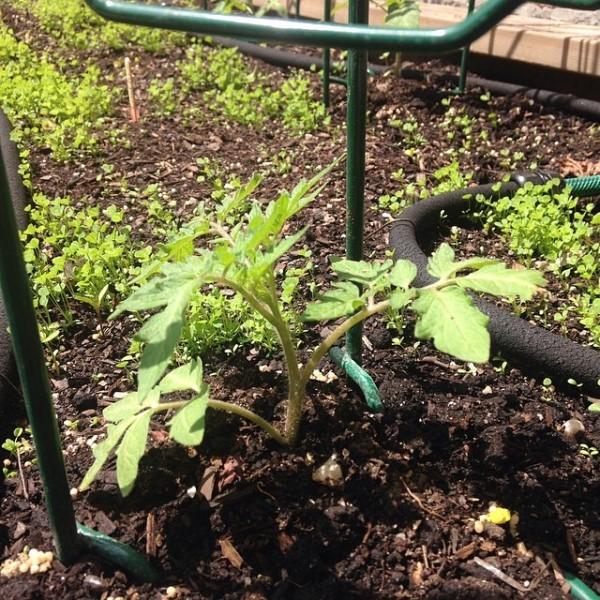 Tips para el jardinero 2
