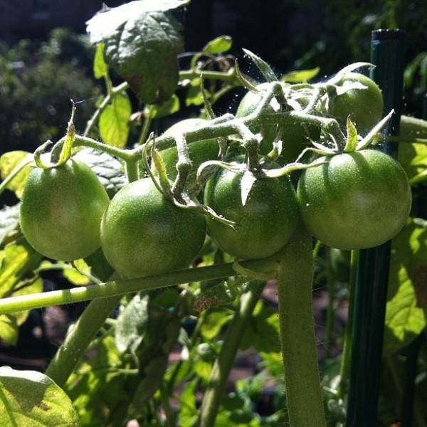 Tips para el jardinero 5
