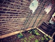 imagen 12 tips para el nuevo jardinero urbano