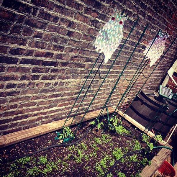 Tips para el jardinero 6